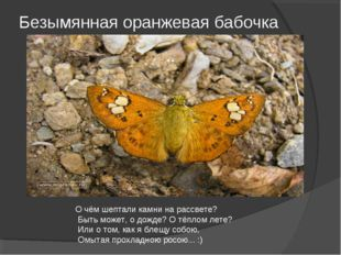 Безымянная оранжевая бабочка О чём шептали камни на рассвете? Быть может, о д