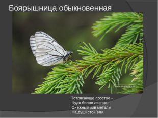 Боярышница обыкновенная Потрясающе простое - Чудо белое лесное... Снежный зов