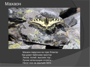 Махаон Махаон-парусник на горе Ялангас Как дорог бабочкам простор Лесов, поле
