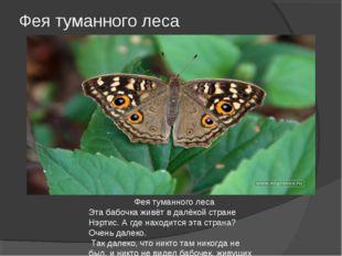 Фея туманного леса Фея туманного леса Эта бабочка живёт в далёкой стране Нэрт