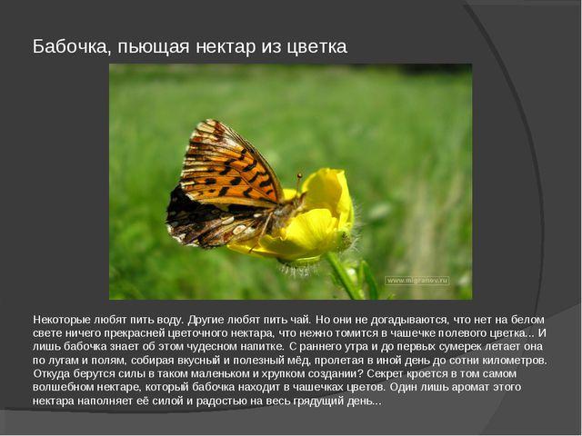 Бабочка, пьющая нектар из цветка Некоторые любят пить воду. Другие любят пить...