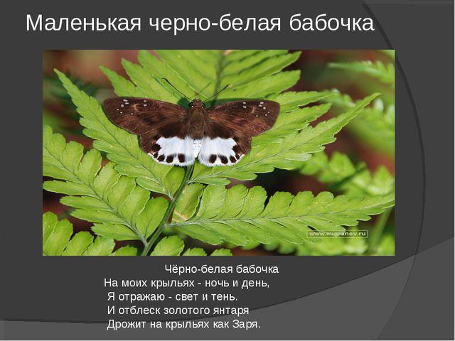Маленькая черно-белая бабочка Чёрно-белая бабочка На моих крыльях - ночь и де...