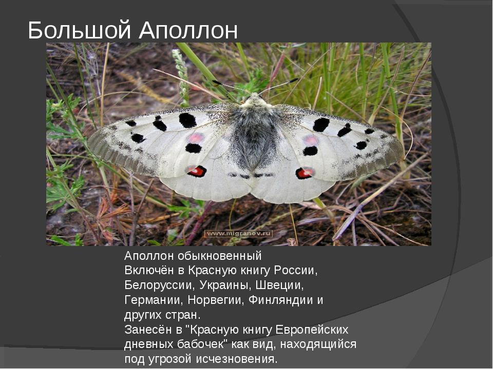 Большой Аполлон Аполлон обыкновенный Включён в Красную книгу России, Белорусс...