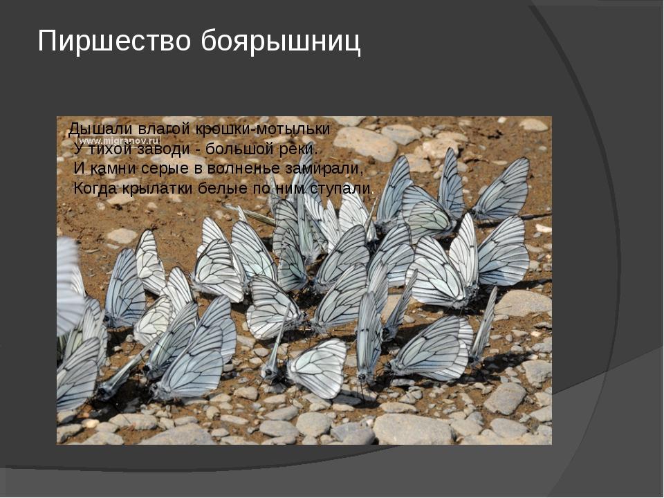 Пиршество боярышниц Дышали влагой крошки-мотыльки У тихой заводи - большой ре...
