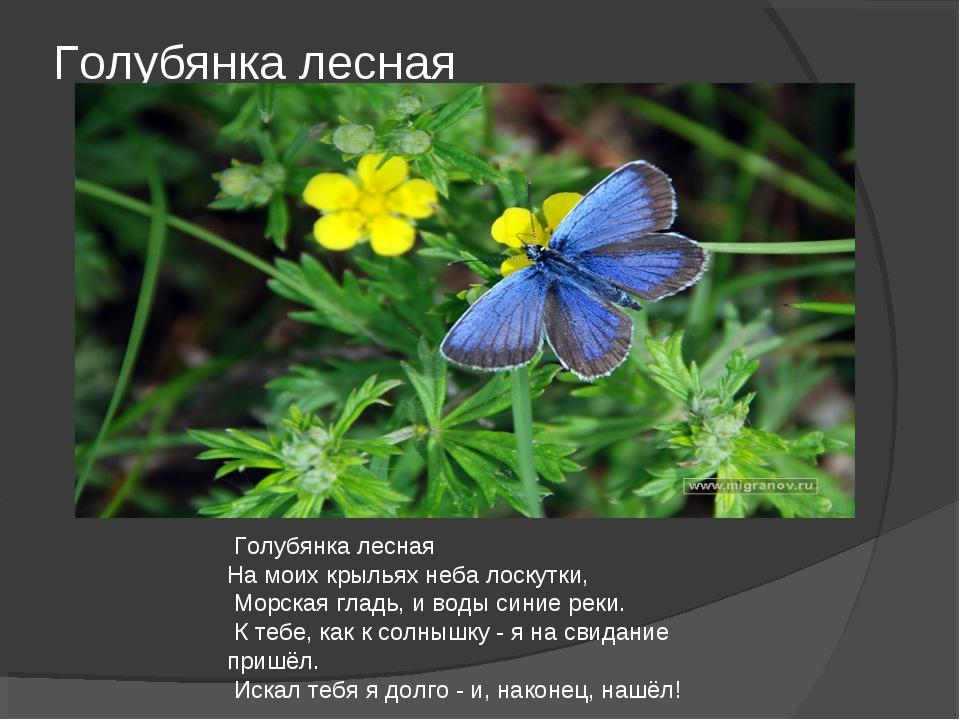 Голубянка лесная Голубянка лесная На моих крыльях неба лоскутки, Морская глад...