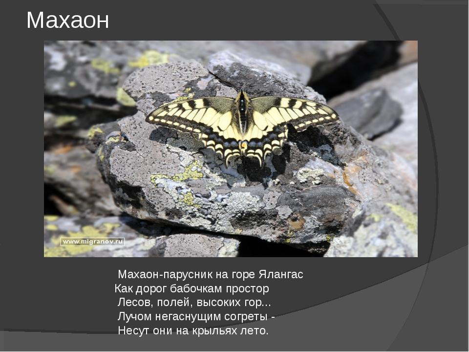 Махаон Махаон-парусник на горе Ялангас Как дорог бабочкам простор Лесов, поле...