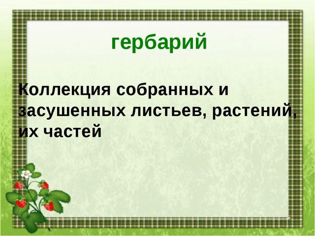 гербарий Коллекция собранных и засушенных листьев, растений, их частей