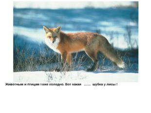 Животным и птицам тоже холодно. Вот какая …… шубка у лисы !