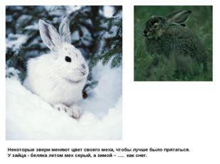 Некоторые звери меняют цвет своего меха, чтобы лучше было прятаться. У зайца