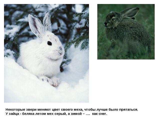 Некоторые звери меняют цвет своего меха, чтобы лучше было прятаться. У зайца...