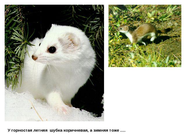 У горностая летняя шубка коричневая, а зимняя тоже ….