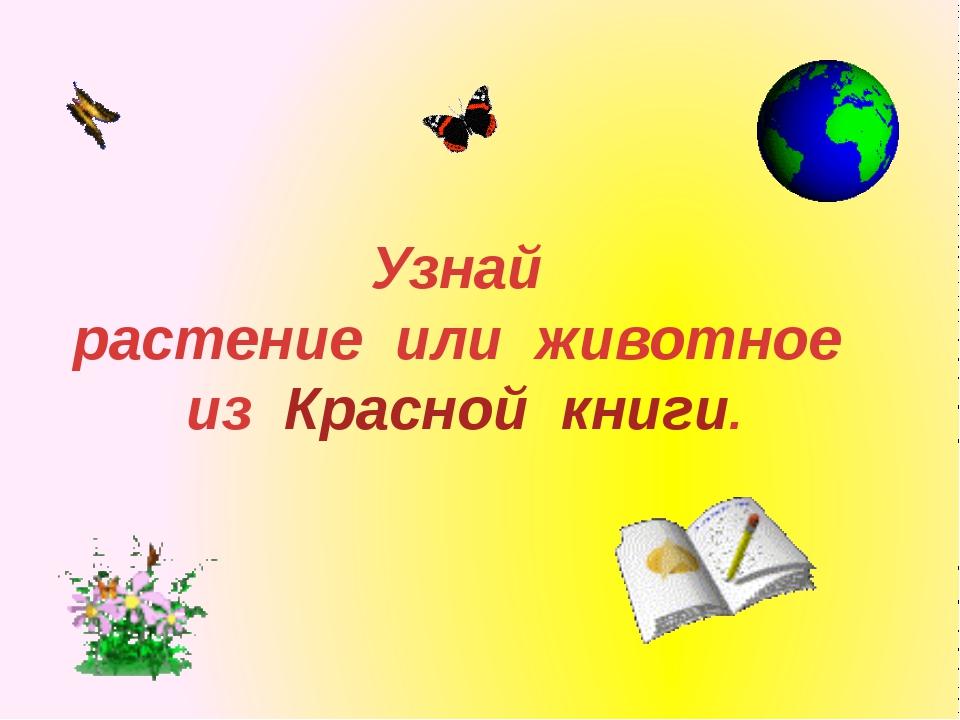 Узнай растение или животное из Красной книги.