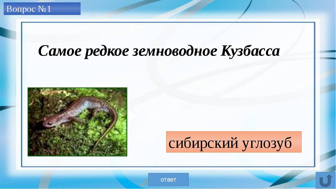 Вопрос №2 королек ответ Самая маленькая птичка наших лесов