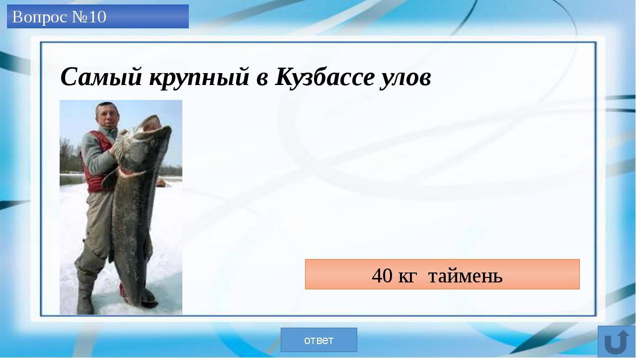 гриб-дождевик весом 5 кг ответ Самый крупный в Кузбассе «улов» на тихой охот...