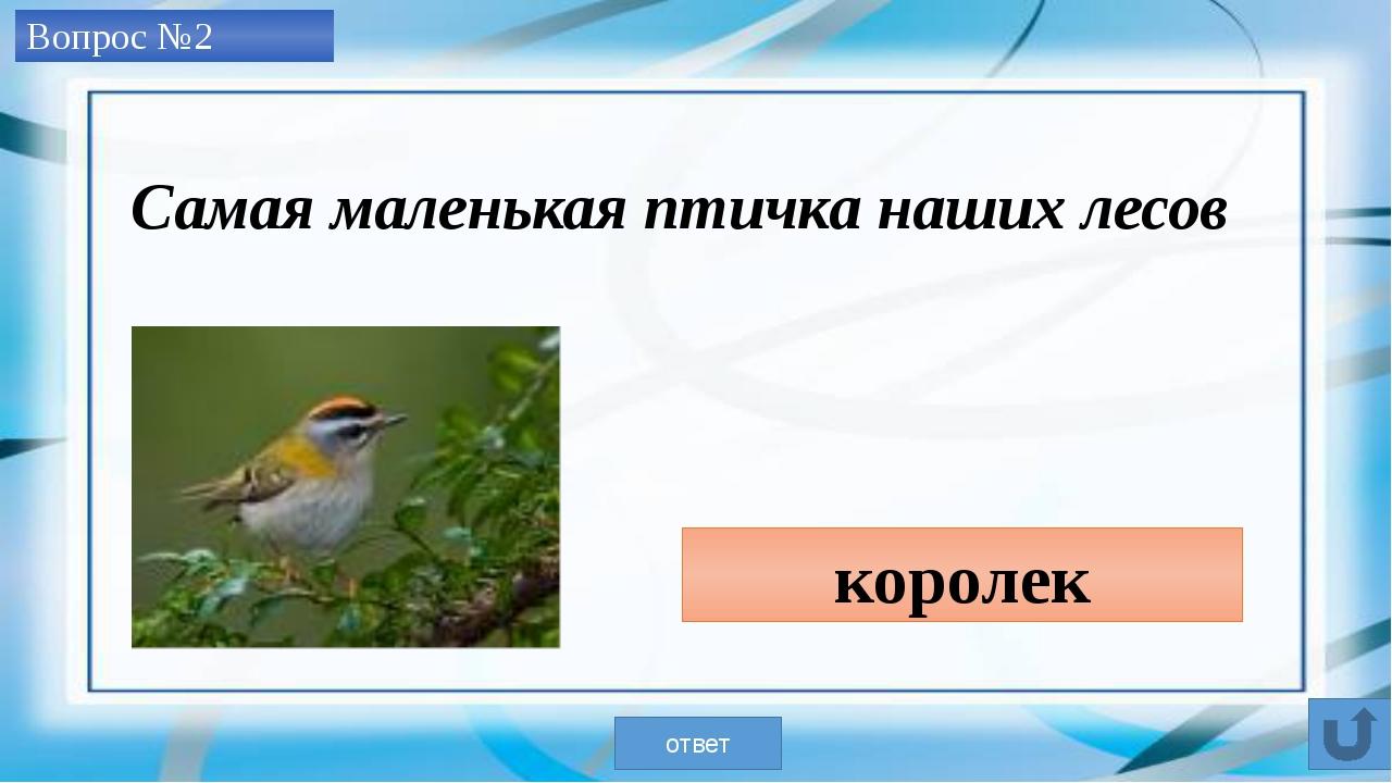 Вопрос №3 лось ответ Самый крупный олень наших лесов