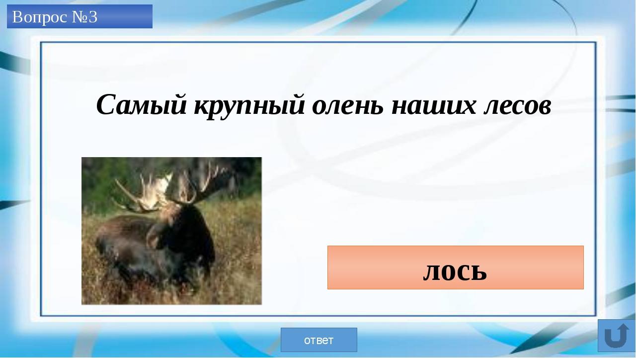 Вопрос №4 Кабарга ответ Самый примитивный олень, ведет одиночный образ жизни