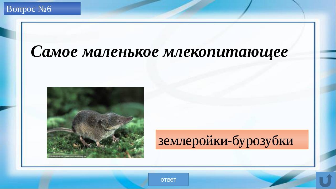 Вопрос №7 Глухарь и лебедь-кликун ответ Самая крупная из оседлых и перелетны...