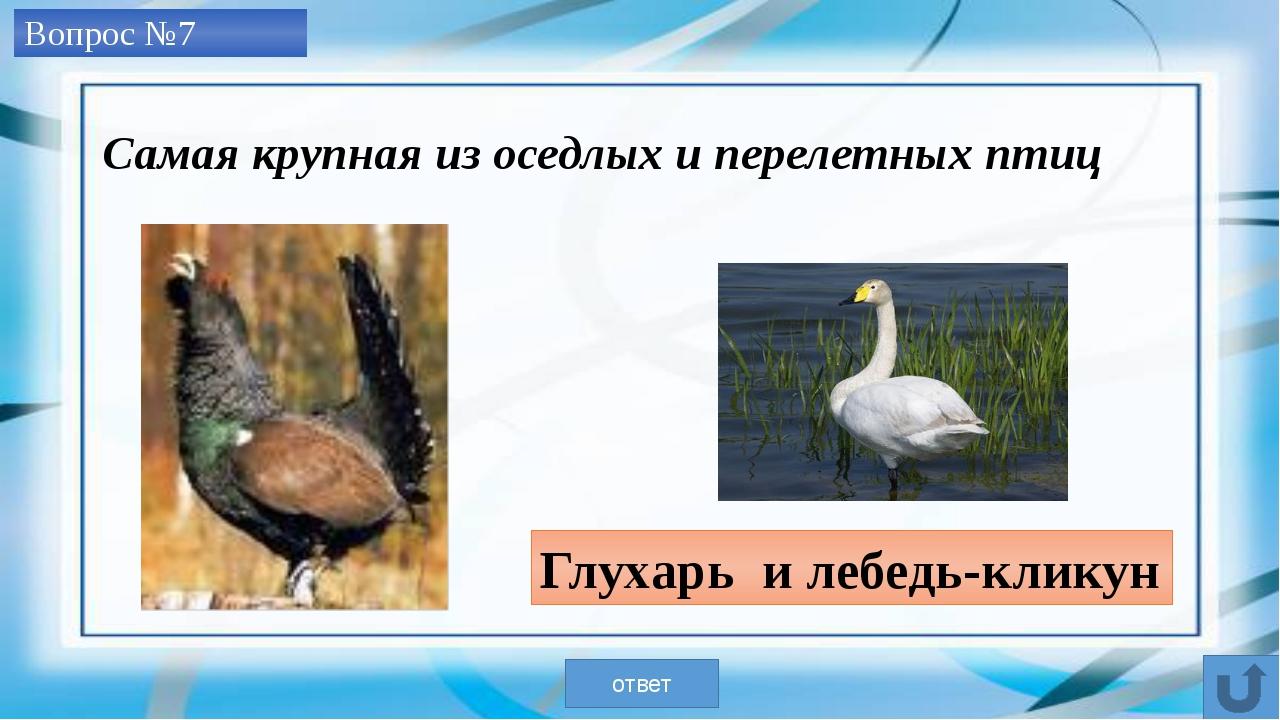 Вопрос №8 Скопа ответ Самый искусный рыболов из рода соколов