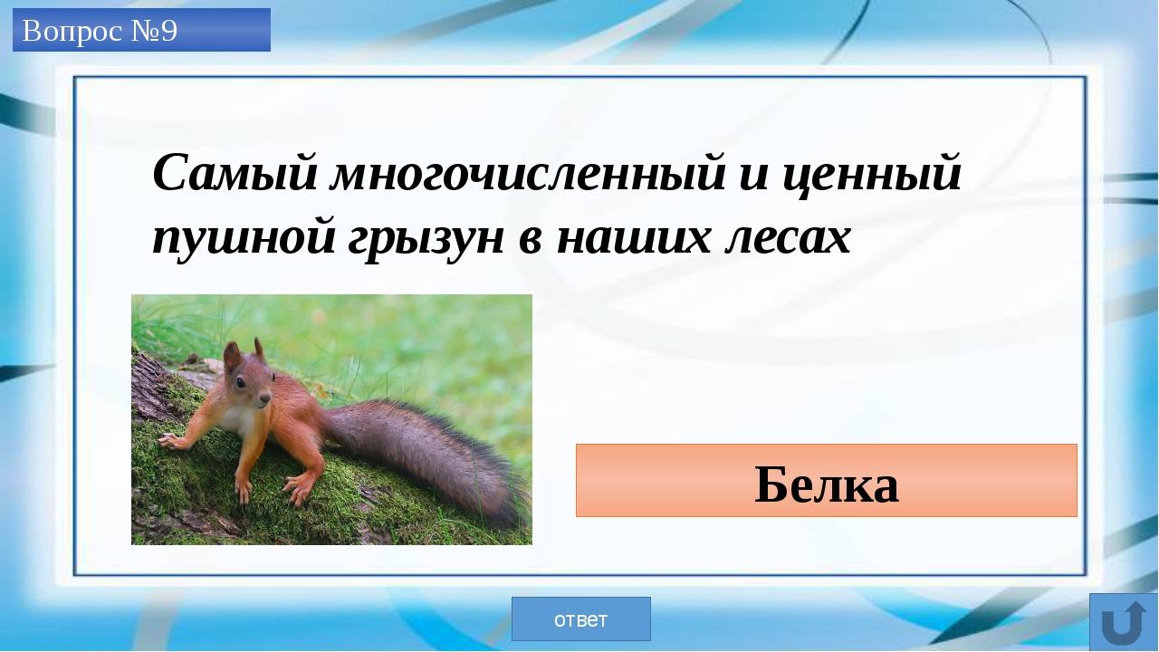 40 кг таймень ответ Самый крупный в Кузбассе улов Вопрос №10