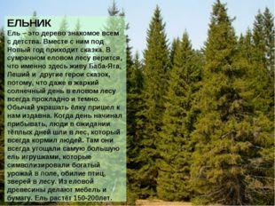 ЕЛЬНИК Ель – это дерево знакомое всем с детства. Вместе с ним под Новый год п