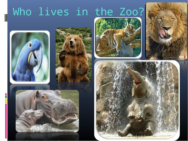 Who lives in the Zoo?