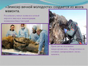 «Эликсир вечной молодости» создается из мозга мамонта. Российские ученые выяв