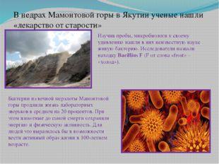 В недрах Мамонтовой горы в Якутии ученые нашли «лекарство от старости» Изучив