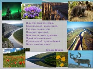 Я люблю твои просторы, Край якутский, край родной, Где леса, поля и горы П