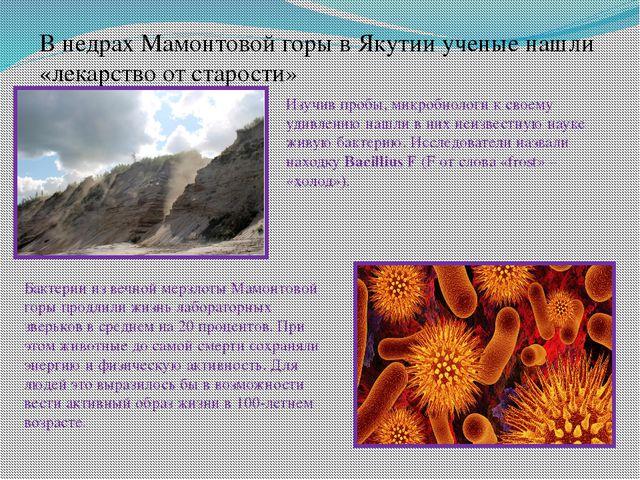 В недрах Мамонтовой горы в Якутии ученые нашли «лекарство от старости» Изучив...