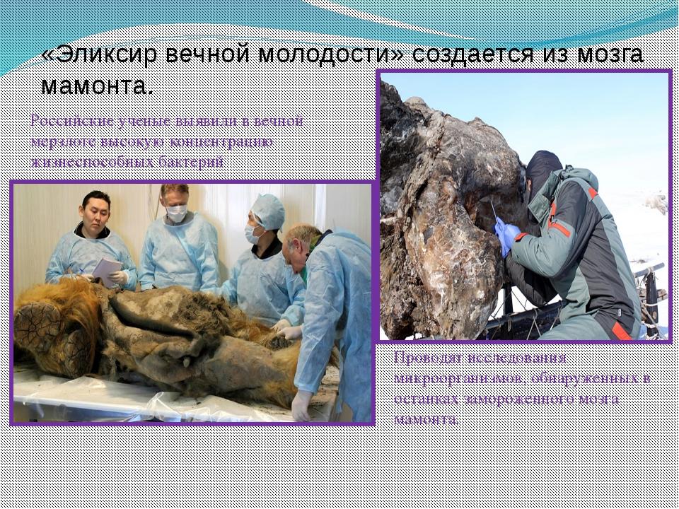 «Эликсир вечной молодости» создается из мозга мамонта. Российские ученые выяв...