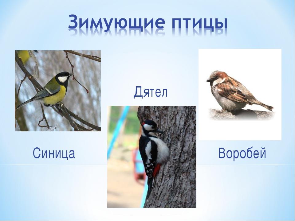 Воробей Синица Дятел