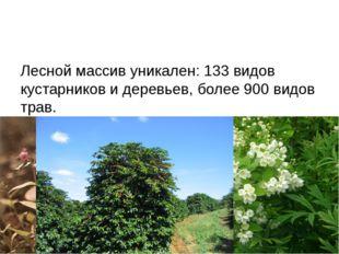 Лесной массив уникален: 133 видов кустарников и деревьев, более 900 видов тр