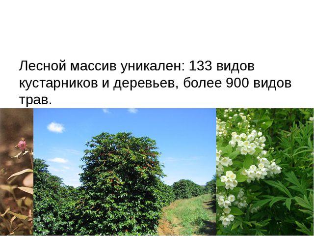 Лесной массив уникален: 133 видов кустарников и деревьев, более 900 видов тр...