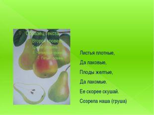Листья плотные, Да лаковые, Плоды желтые, Да лакомые. Ее скорее скушай. Созр