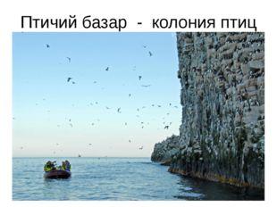 Птичий базар - колония птиц