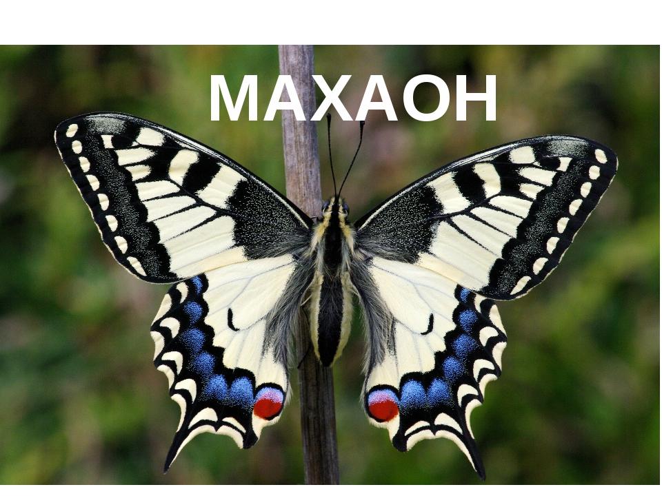 «Шайтан-Тау» МАХАОН