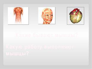 Какие бывают мышцы? Какую работу выполняют мышцы?