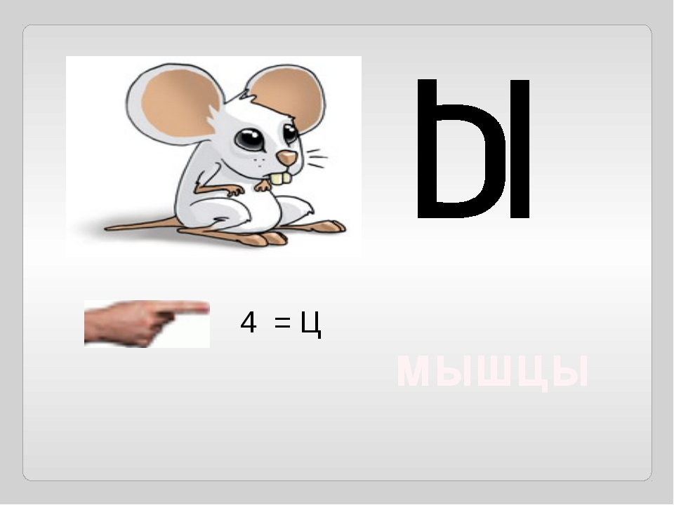 4 = Ц мышцы