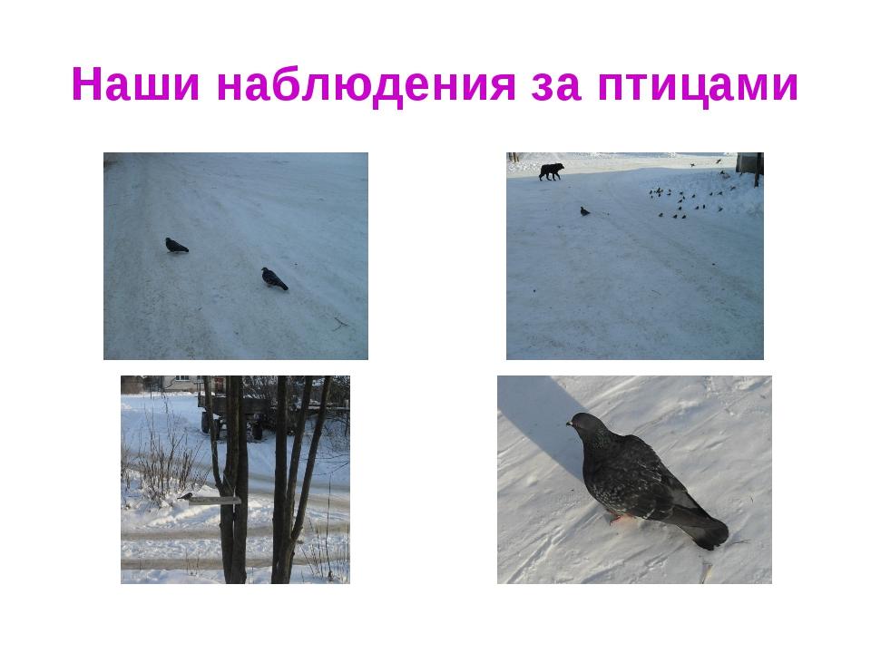 Наши наблюдения за птицами