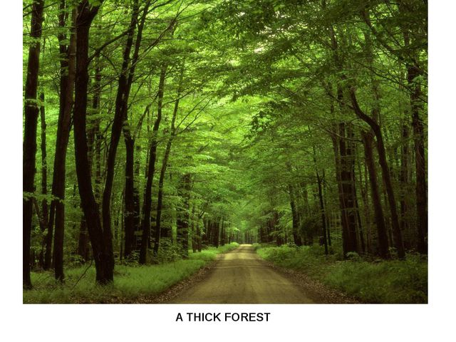 A THICK FOREST