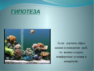 ГИПОТЕЗА Если изучить образ жизни и поведение рыб, то можно создать комфортны