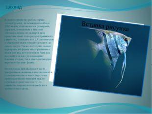 Цихлид Большое семейство рыб из отряда окунеобразных, включающее в себя до 20