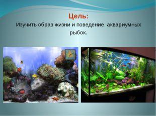Цель: Изучить образ жизни и поведение аквариумных рыбок.