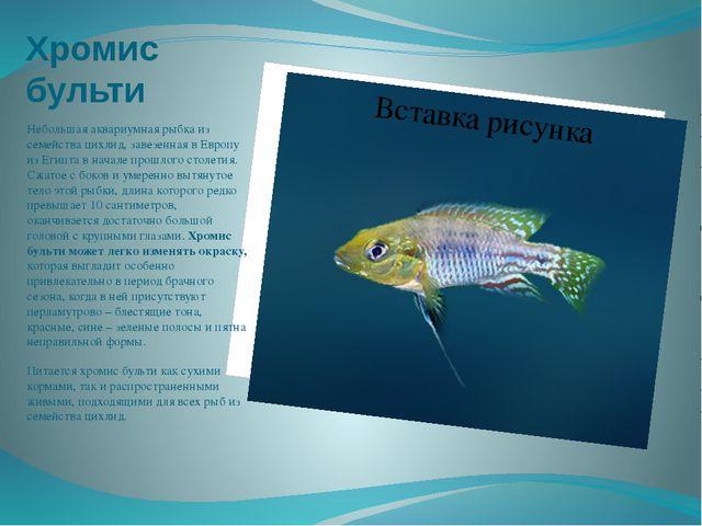 Хромис бульти Небольшая аквариумная рыбка из семейства цихлид, завезенная в Е...