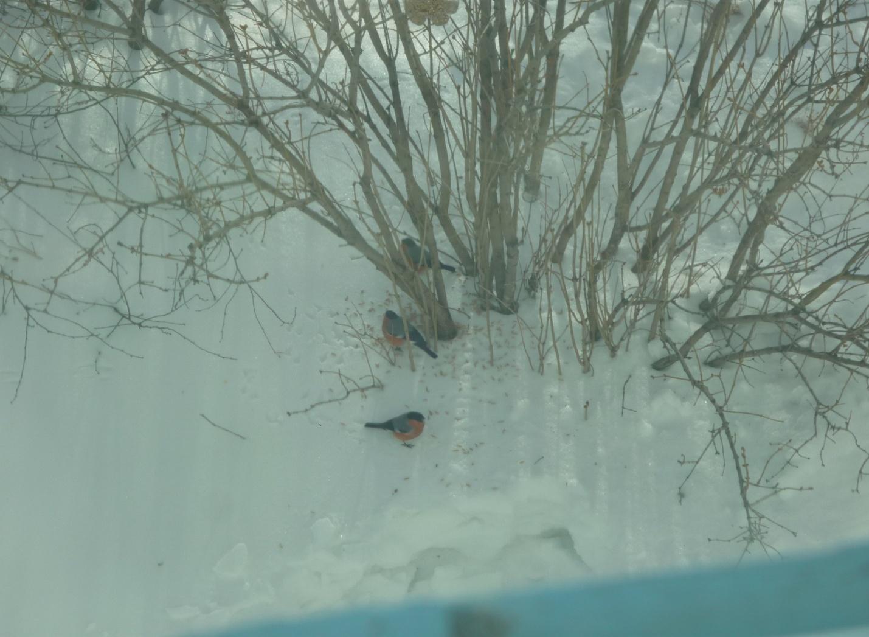 C:\Users\Владимировка1\Desktop\готовые фото птицы на кормушке\готовые фото, птицы на кормушке\P1040832.JPG
