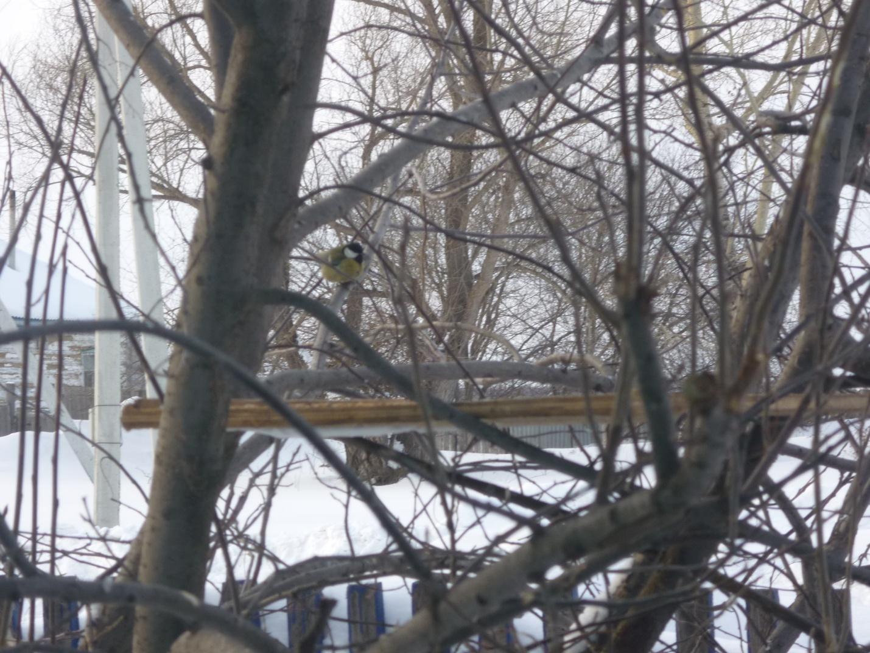 C:\Users\Владимировка1\Desktop\готовые фото птицы на кормушке\готовые фото, птицы на кормушке\P1040770.JPG