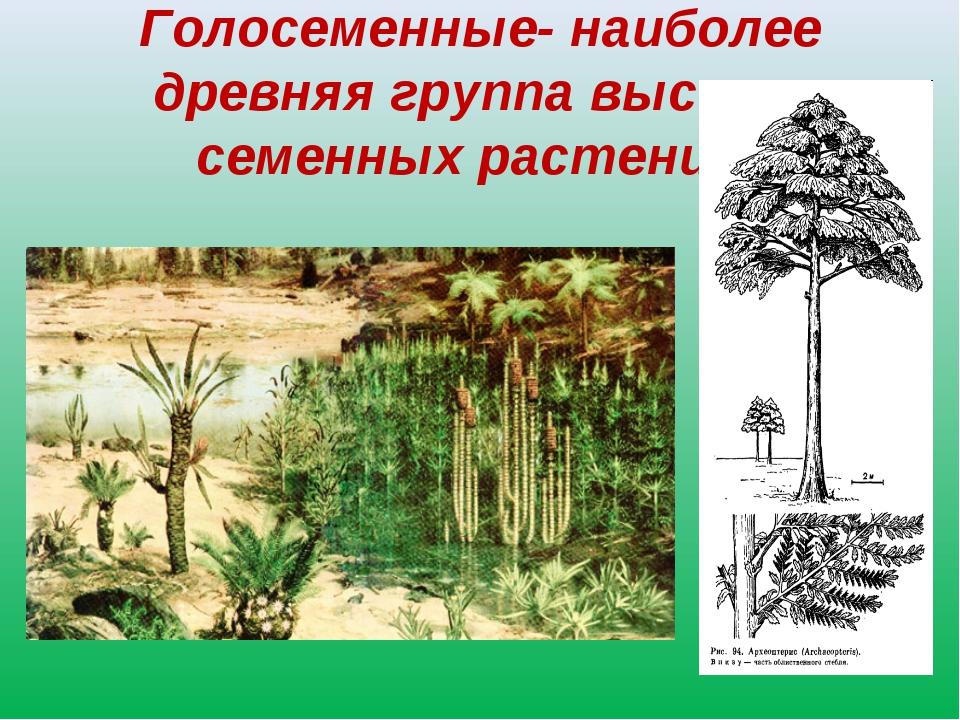Голосеменные- наиболее древняя группа высших семенных растений.