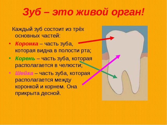 Зуб – это живой орган! Каждый зуб состоит из трёх основных частей: Коронка –...