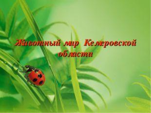 Животный мир Кемеровской области