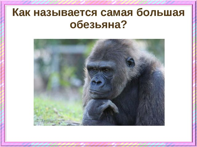 Как называется самая большая обезьяна?